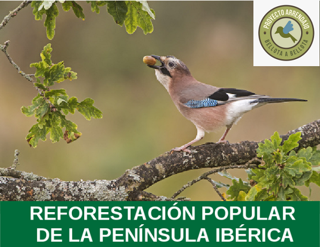 proyecto arrendajo_Naturaleza Ibérica .png
