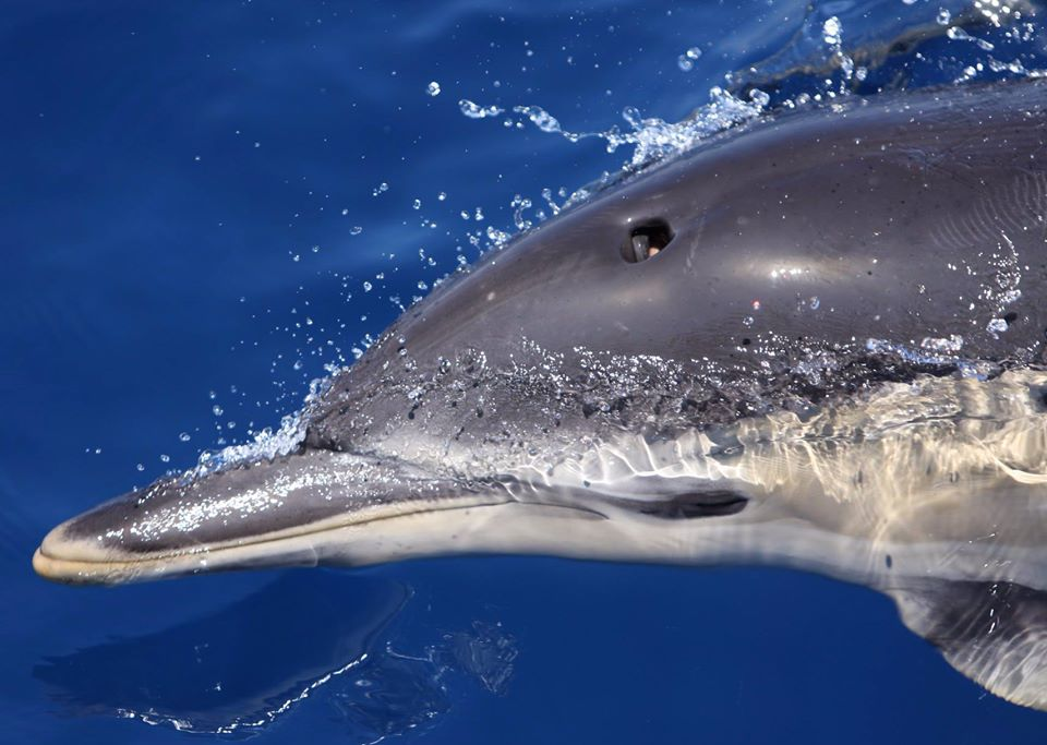 delfin 1_Naturaleza Ibérica.jpg